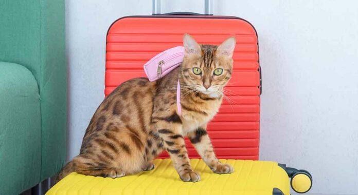 Cosa mettere in valigia per il gatto