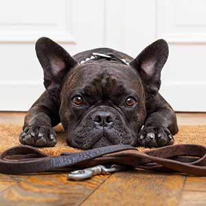 collare guinzaglio pettorina per cani