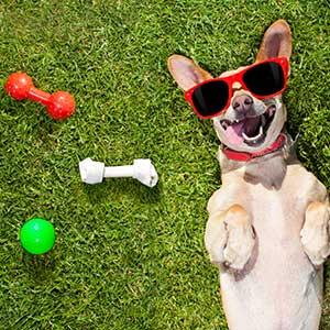 giochi per cani nella valigia