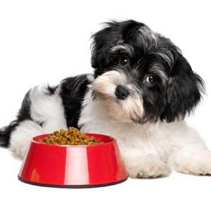 portare cibo nella valigia per il cane