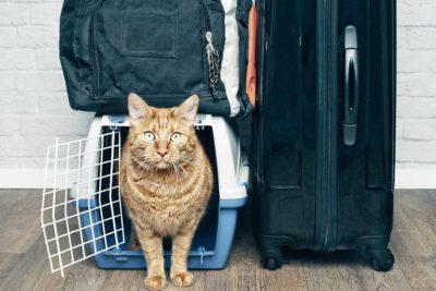 Valigia per il gatto