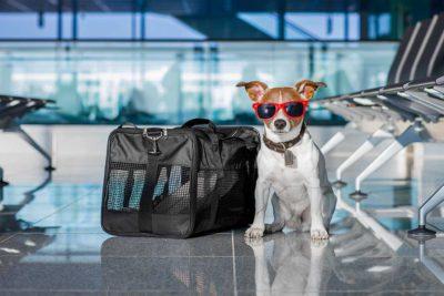 viaggiare in svizzera con il cane