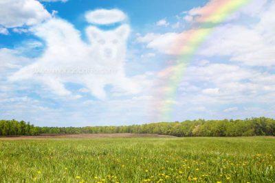 leggenda del ponte dell'arcobaleno per cani e gatti