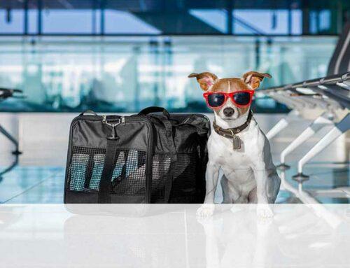 Valigia per il cane: tutto quello che può servirti in vacanza