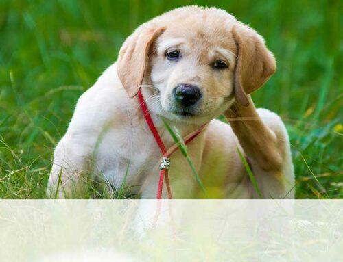 Antiparassitari per cani: quali scegliere