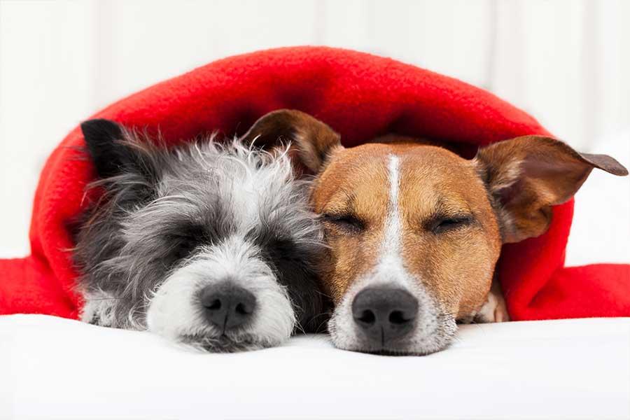 pensione per cane in canton Ticino