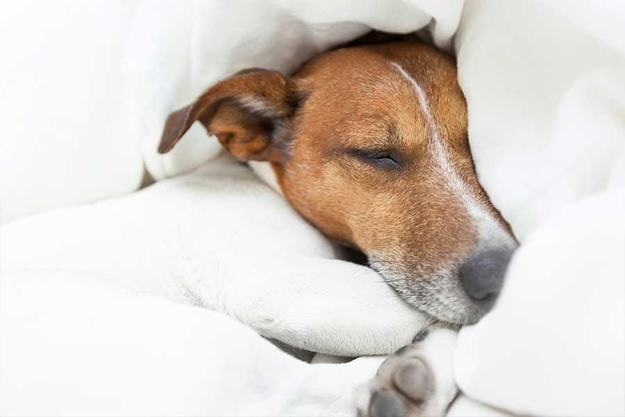 pensione per cani in Canton ticino