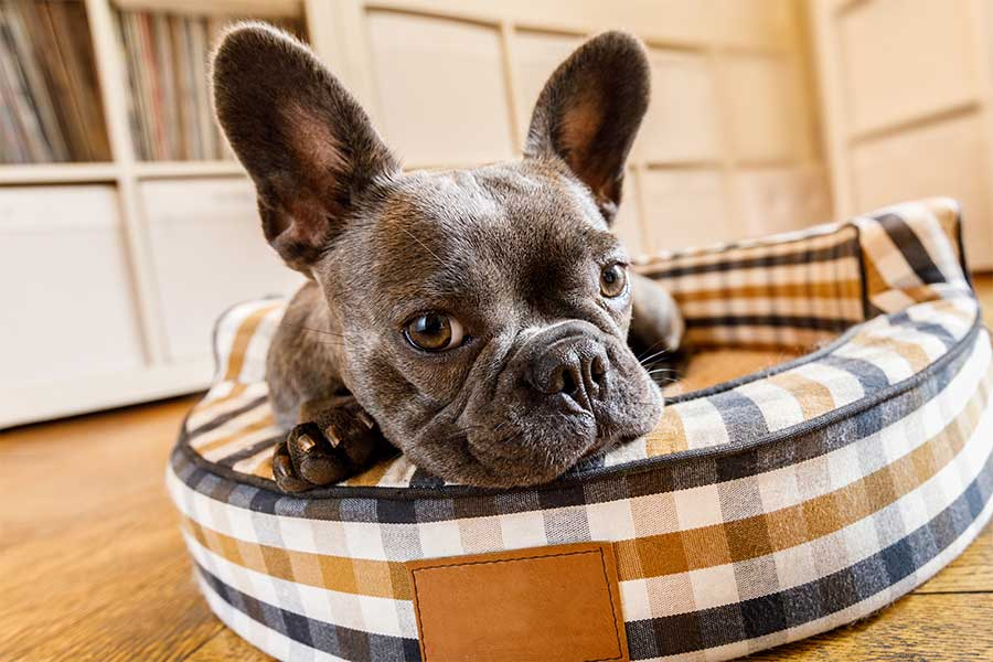 pensione per cani in Ticino Svizzera