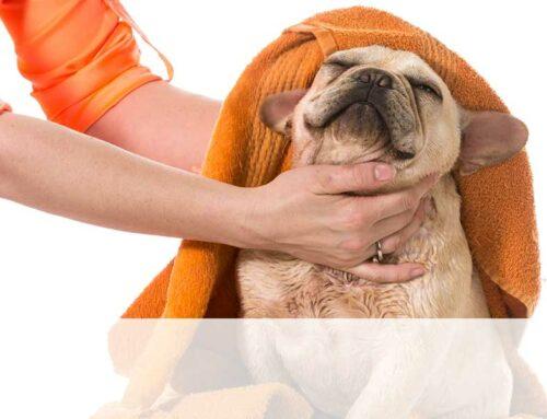 Cani e gatti: come prendersi cura della loro igiene