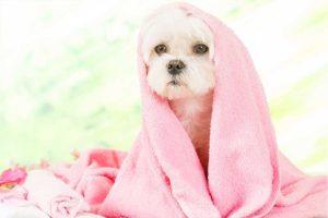 come lavare il cane e fare il bagno al cane