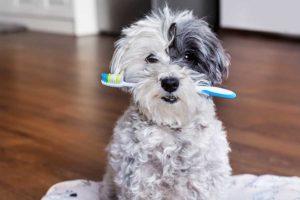 lavare i denti al cane pulire denti e gengivi dei cani