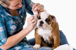 pulire le orecchie a cani e gatti