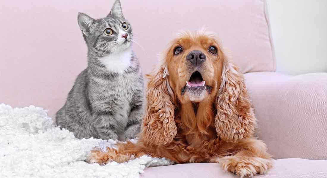 Proteggi il tuo cane o gatto dal diabete
