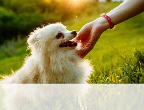 Come avvicinarsi e accarezzare un cane che non si conosce