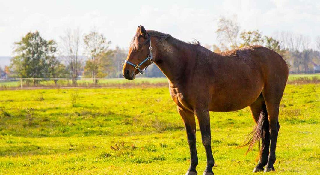 Cavallo e colpi di calore: ecco quello che devi sapere