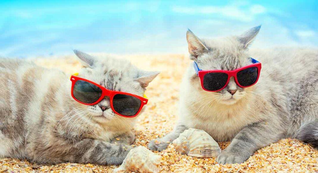 Come rinfrescare il tuo gatto in estate