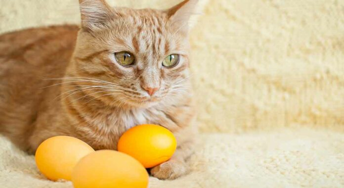 alimenti tossici per gatti